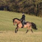 cheval au galop monte en exterieur
