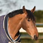 cheval au paddock avec des couvertures