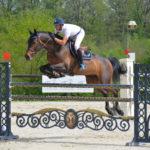 cheval bai brun concours saut d'obstacles