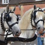 chevaux de trait attelés