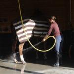 douche d'un cheval