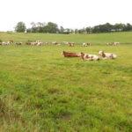 Conduire le troupeau en respectant un cahier des charges