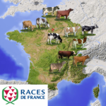 Races de France - carte bovins laitiers