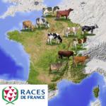 Races de France - carte bovins laitiers
